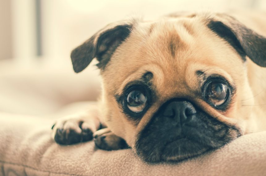 10 Secrets That Your Dog Does Not Tell You!