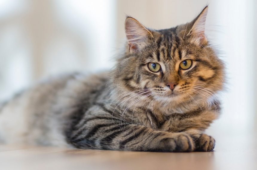 6 Things You Should Never Do To Your Cat